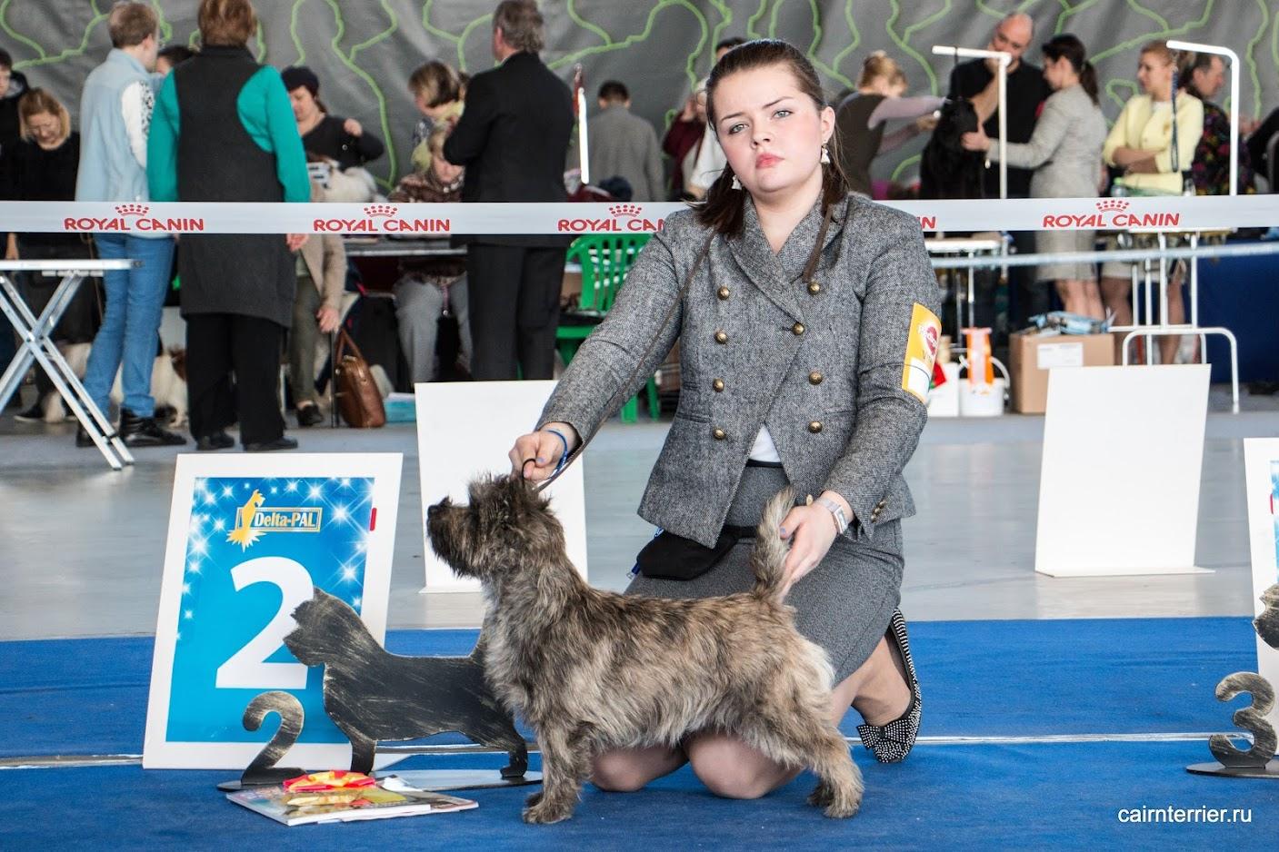 Фото керн терьера питомника Еливс с хендлиром на призовом месте выставки