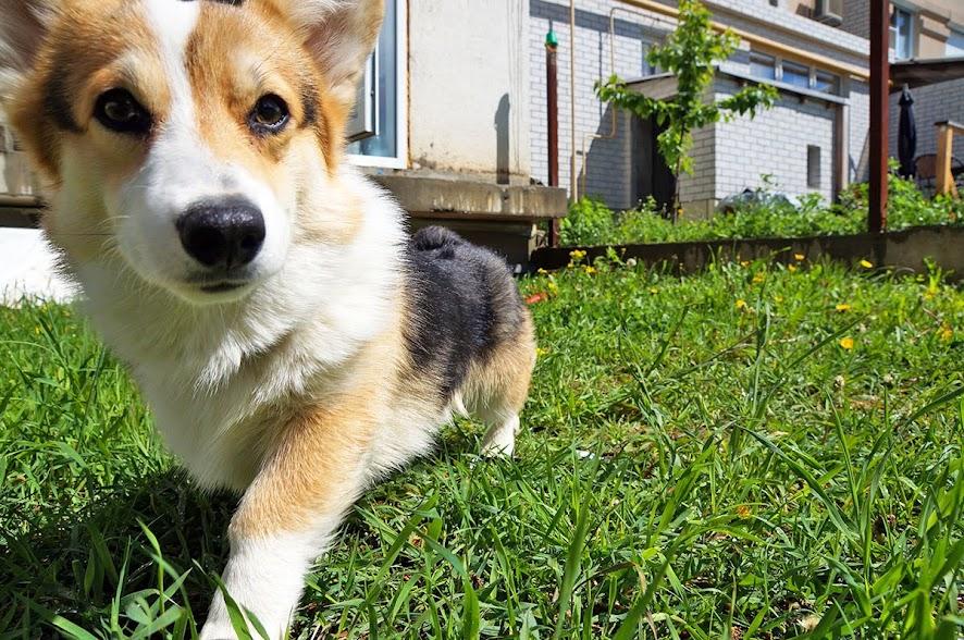 Из жизни нерадивого собаковода