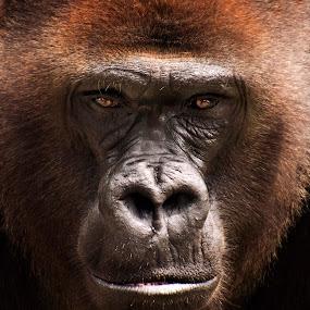 by Brook Kornegay - Animals Other Mammals (  )
