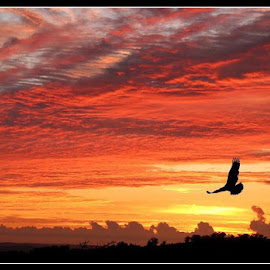 Eagle soars by Romano Volker - Landscapes Sunsets & Sunrises