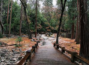 Photo: Path to Lower Yosemite Falls in rain-soaked color. Day 2, SX. #2277