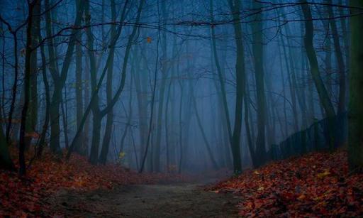玩解謎App|アラームの森からの脱出免費|APP試玩