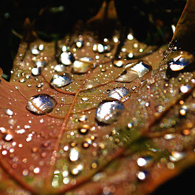 Fall Morning by Ellason Boyle - Nature Up Close Leaves & Grasses ( water, colorful, fall, pwcautumn-dq, leaf, morning, droplets )