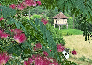 Photo: Flowering Tree and Pigeonnier, Larroque-Toirac