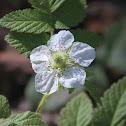 Wild Berry Flower