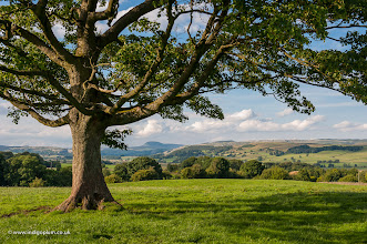 Photo: The Dales View from Wigglesworth