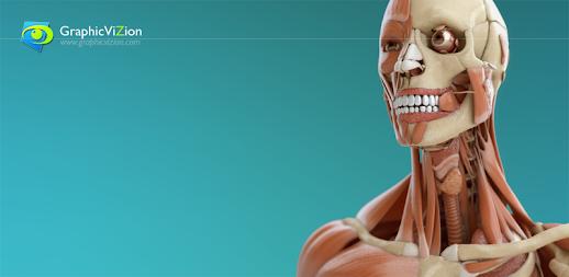 Visual Anatomía 3D | Humano APK - apkname.net
