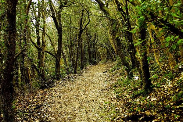 In ogni passeggiata nella natura l'uomo riceve molto di più di ciò che cerca. di Giannigiansanti