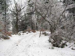 Photo: 14.Blisko szczytu Szczebla (Strzebla). Mrozik trzyma.