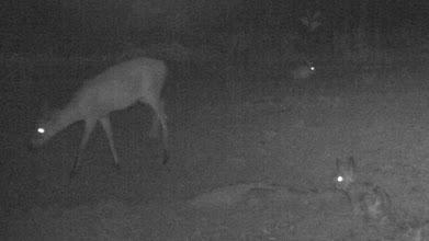 Photo: Duiker and scrub hares; Bambi e lebres.