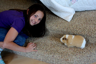 Photo: (Year 3) Day 26 - Nadia With Her Guinea Pig