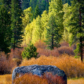 Autumn mixed in by Kati Garner - Landscapes Prairies, Meadows & Fields ( fall colors, bushes, trees, pwcautumn, rock, valley )