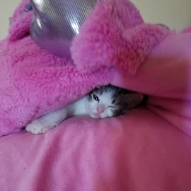 so cozy by Shelby Dennis - Animals - Cats Kittens ( pink, kitten, cute )
