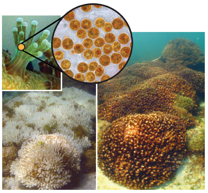 Corals For Teachers! A Web Toolkit For