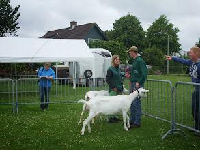 Photo: Klasse 3: 2 en 3 jarige witte geiten.  2a. Miep 16 vd Heuvel; 2b. Miep 17 vd Heuvel.