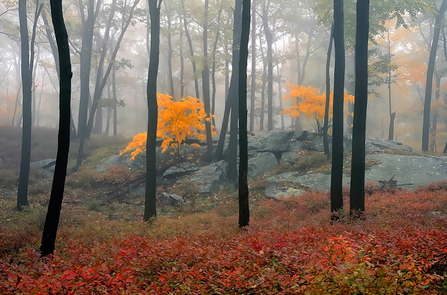 by Anne Marie Hickey - Landscapes Forests ( pwcautumn )