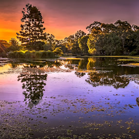 Reflections by Alex Bogdan - Landscapes Sunsets & Sunrises ( water, orange, grass, reflections, lake, dusk, birds, sun, colours, lillies, red, sky, sunset, trees, garden )
