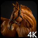 Лошадей 4K видео живые обои icon