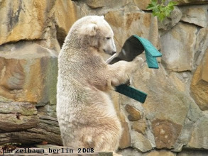 Photo: Knut untersucht das Ding aufmerksam ;-)
