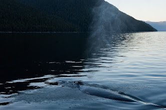 Photo: Farewell, good friend; this humpback stayed with us for 40 minutes.