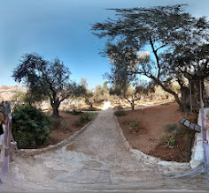 Photo: Looking over the fence into the Garden of Gethsemane