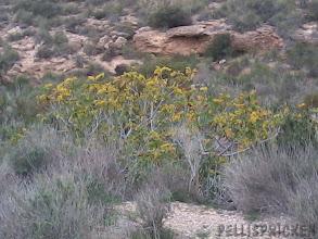 Photo: Ett träd med vissna blad som lyser upp tillvaron