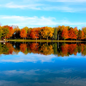 Reflected by Ronnie Caplan - Landscapes Waterscapes ( water, sky, blue, autumn, fall, reflections, lake, leaves, colours,  )