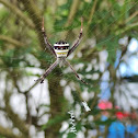 Multi-coloured Saint Andrew's Cross Spider