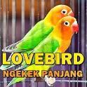 Suara Lovebird Ngekek Panjang MP3 Offline icon