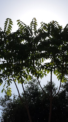 L'albero che fa ombra di Lila