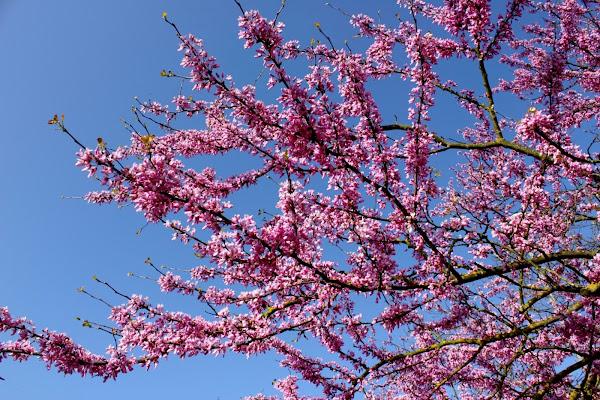 E' Primavera!!!! di ariosa