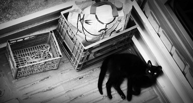 Il gatto nero di Carlo de Lauro