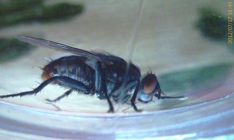 Photo: the horse fly was let go to live