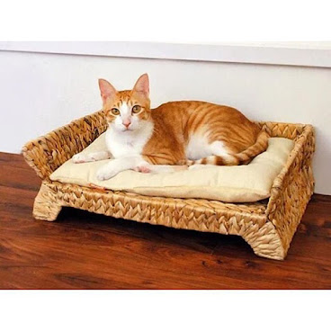 織籐涼爽貓床