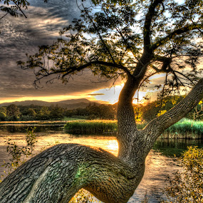 Tree at Borrans Park by Alex Barrow - Nature Up Close Trees & Bushes ( sun set, hdr, tree, lake, ambleside )