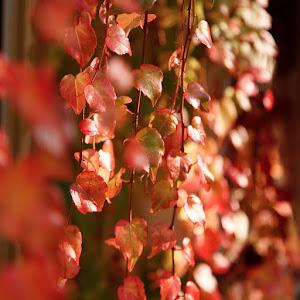 feuilles-automne-1jpg