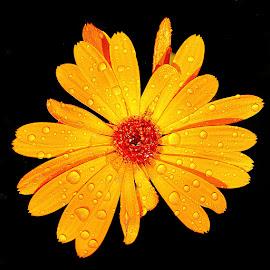 Je me fais du souci by Gérard CHATENET - Flowers Single Flower