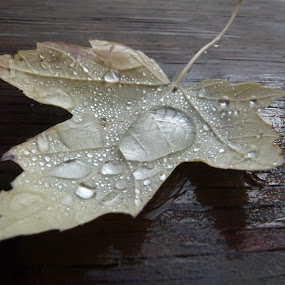 Falling under rain. by Martin Bligh - Nature Up Close Leaves & Grasses ( fall leaves on ground, fall leaves )
