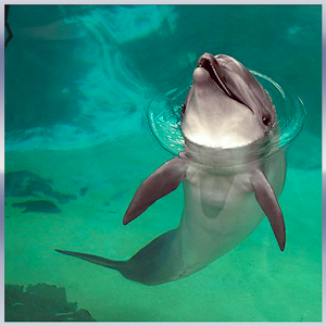 Dolphin Rescue Simulator 3D for PC and MAC