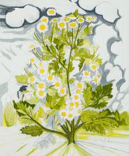 "Photo: Feverfew Drawing, pencil and acrylic on mylar, 36"" x  30"", 2012"