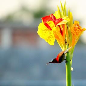 by Amalendu Saha - Flowers Flowers in the Wild
