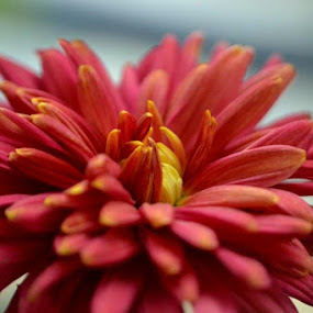 Blooming Flower by Abhishek Majumdar - Nature Up Close Flowers - 2011-2013 ( saurabh, sarbajit, madhur, nitesh, prithvi )