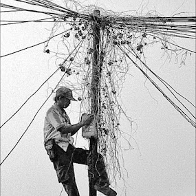 fix the cable network by Krus Haryanto - People Street & Candids