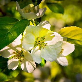 Spring colors by Cretu Stefan Daniel - Nature Up Close Flowers - 2011-2013 ( green, flower )