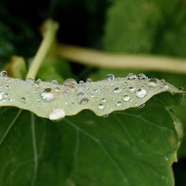 Macro  by Zhenya Philip - Nature Up Close Natural Waterdrops ( macro, droplets, photography )