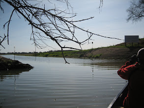 Photo: A new channel opened up through the levee to create wildlife habitat and flood control