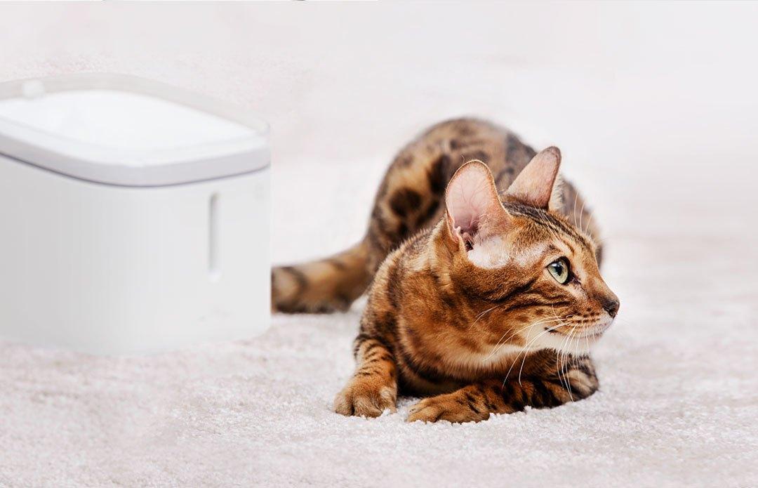 Картинки по запросу Xiaomi Kitten Mijia & Puppy Pet Water Dispenser