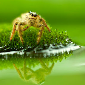 Wanna jump by Andi Halil - Animals Insects & Spiders