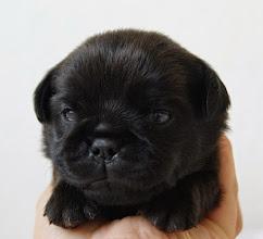 Photo: H. Back In Black 2,5 weeks old