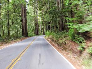 Photo: Lots of Redwood trees